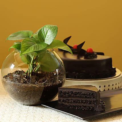 Online Money Plant With  Cake