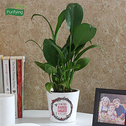 peace lily plant for daughter day