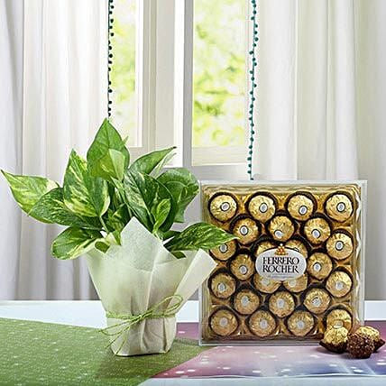 Combo of Money Plant and Chocolates