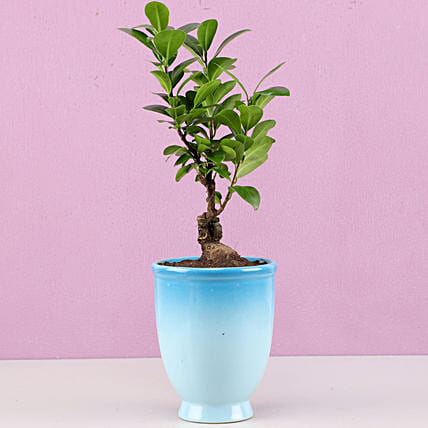 online bonsai plant for bedroom