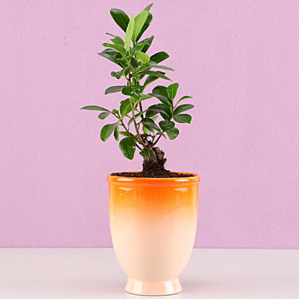 indoor plant for home