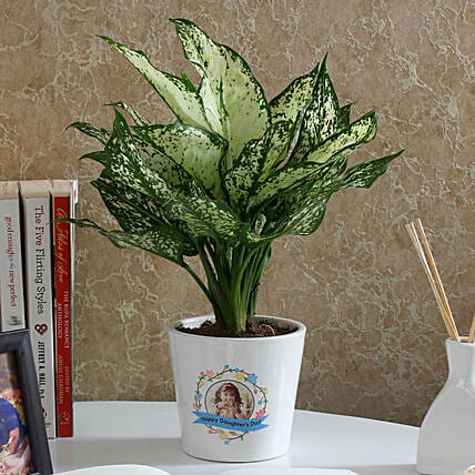 daughter day plants online