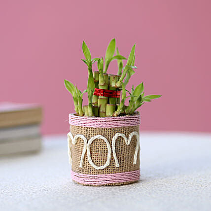 Lucky Bamboo for mom