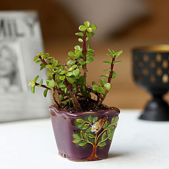 Jade Plant in Purple Pot