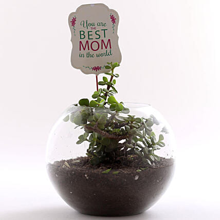 happy mothers day plants online