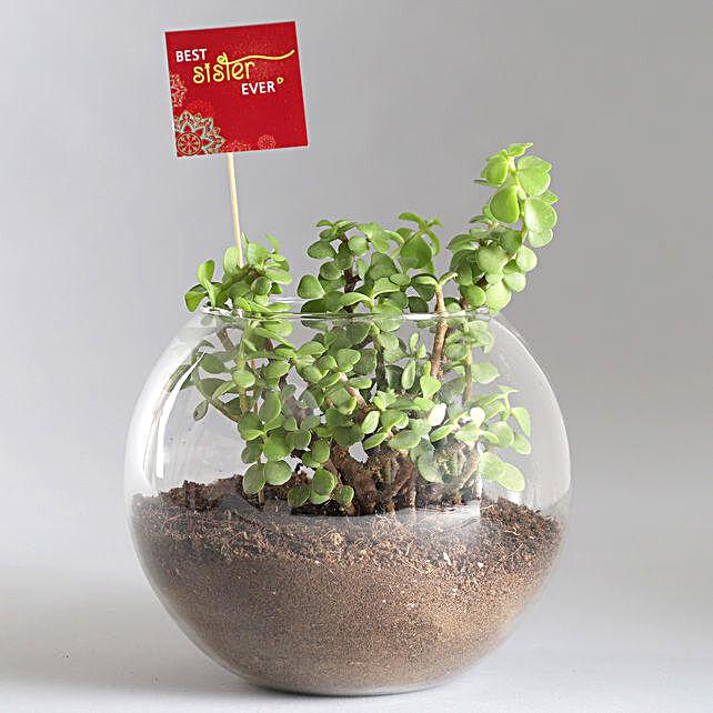 Jade Plant with Rakhi Online