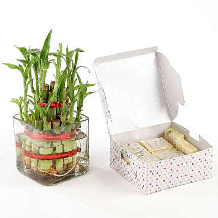 Pista burfi with lucky bamboo