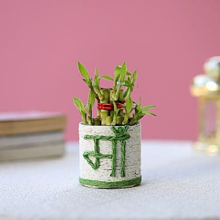 Lucky Bamboo for Mother