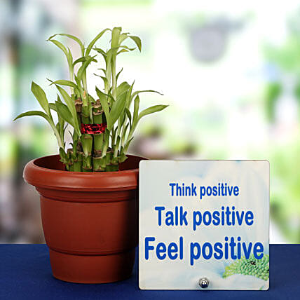 Lucky Inspirational Pair-Think Positive Table Top,2 Layer Bamboo Plant