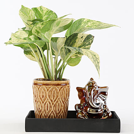 money plant with ceramic pot n platter