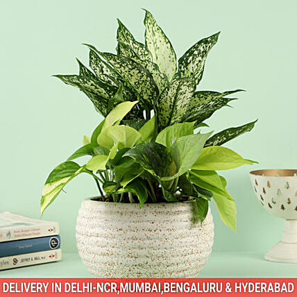 Plant with Planter for Family