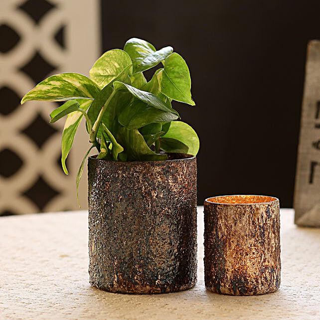 Money Plant in Beautiful Glass Vase
