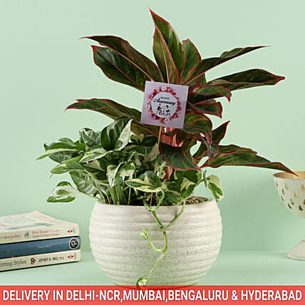 Online Anniversary Air Purifying Plant