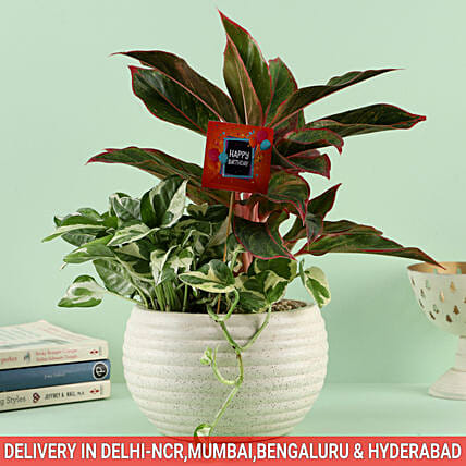 Online Birthday Air Purifying Plant
