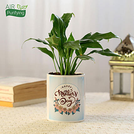 Online Mother's Day Peace Lily Plant