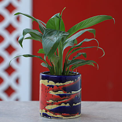 Online Peace Lily In Colorful Pot