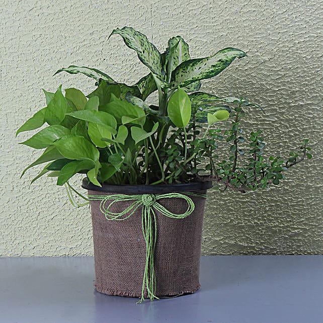 Miniature Garden In A Pot