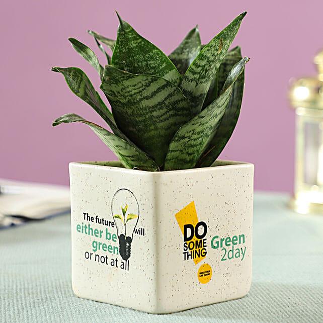 online airpurifying in beige ceramic pot