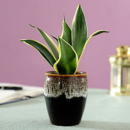 online indoor air purifying plant