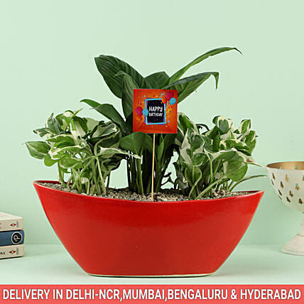 Online Air Purifying Plant For Birthday