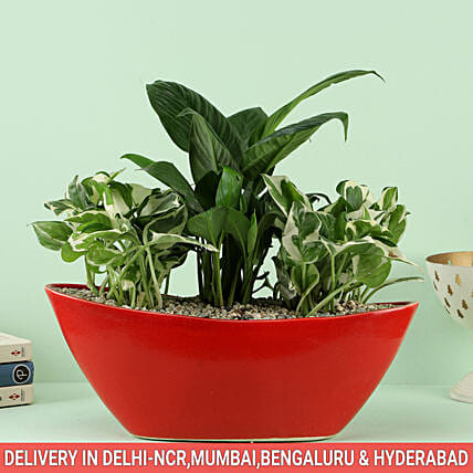Red Pot with Plant Online