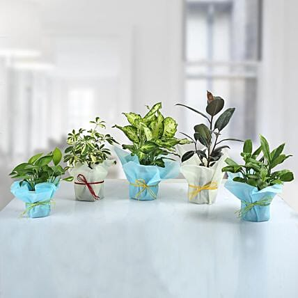 Set Of Green Plants For Home decor