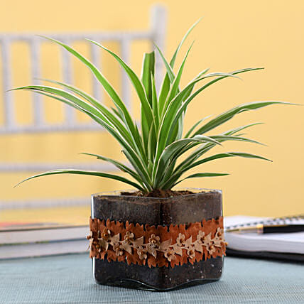 Online Plant In Glass Pot