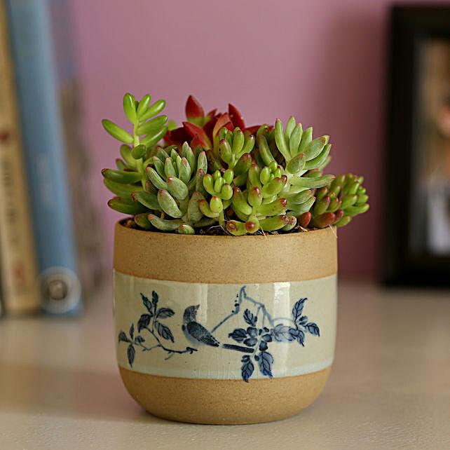 Cute Dish Garden Plant Online