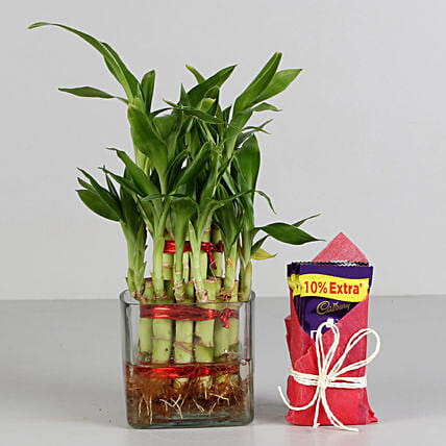 Bamboo Plant and Cadbury Chocolate Combo  for valentine