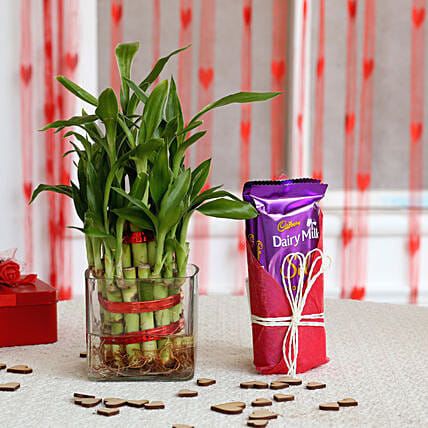 Bamboo Plant and Chocolate Combo for valentine